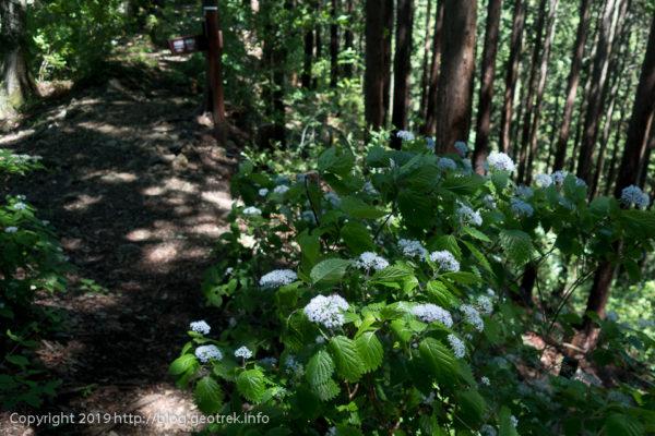 190616 梅雨時は花が多い