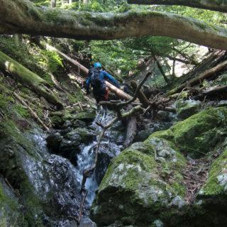 190824 ヒイラギ沢の倒木帯