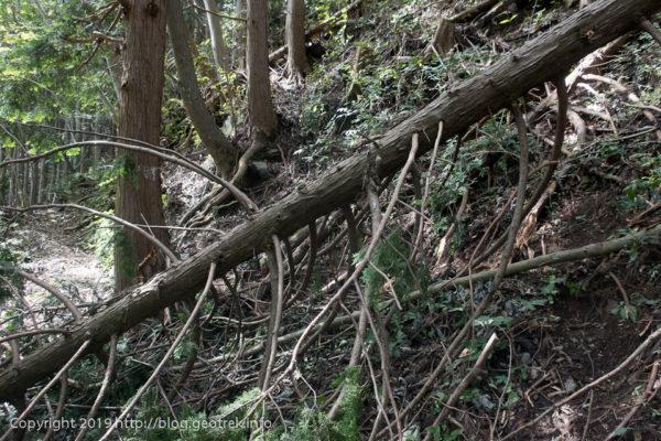 190920 ルート上の倒木