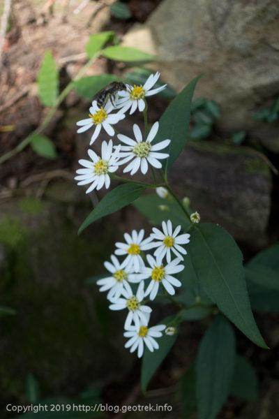 190930 秋の花