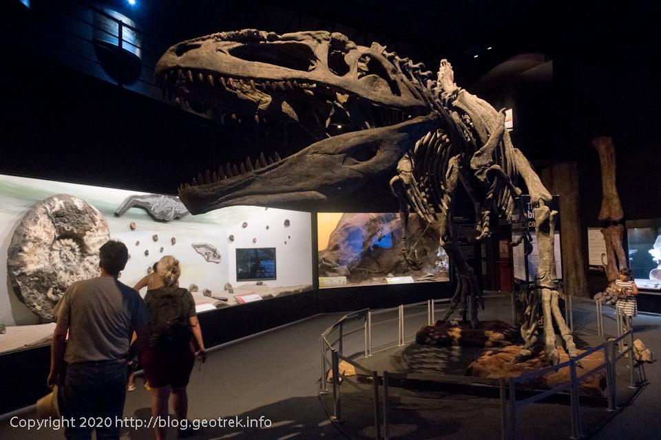 200123 トレレウ古生物博物館