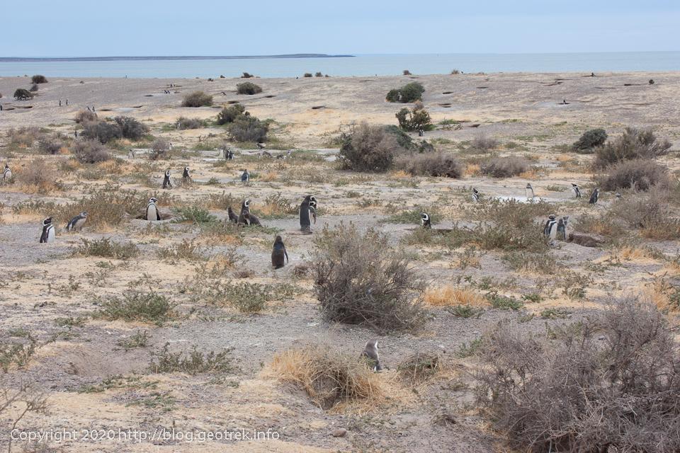 200124 プンタトンボのペンギンたち