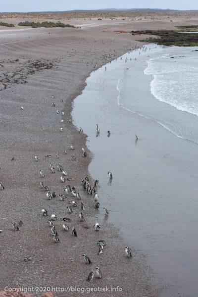 200124 プンタ・トンボ、海岸のペンギン