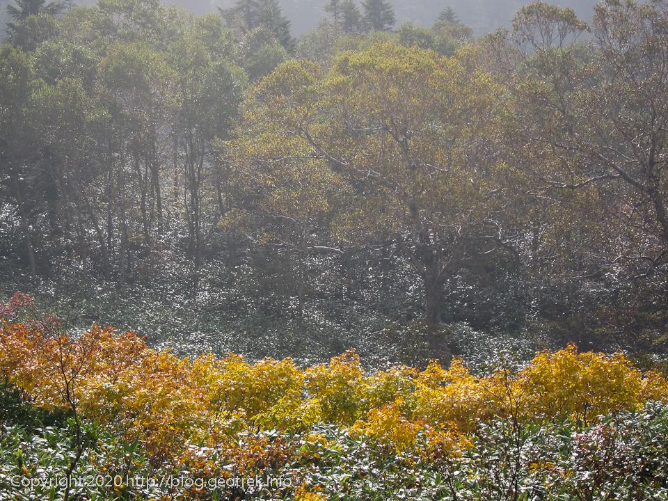 201003 富士見峠へ向かう途中の紅葉
