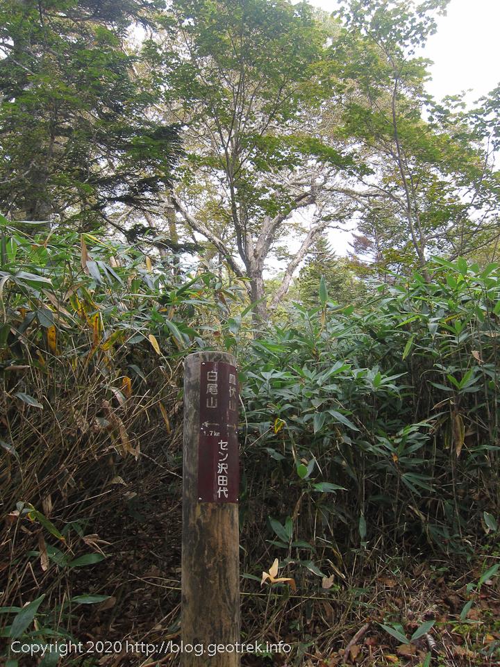 201003 セン沢田代
