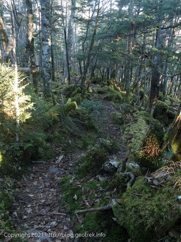 201025 古礼山から苔の森を下る