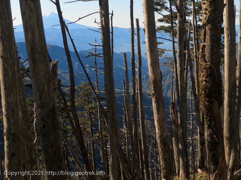201025 雁坂峠から再び針葉樹林