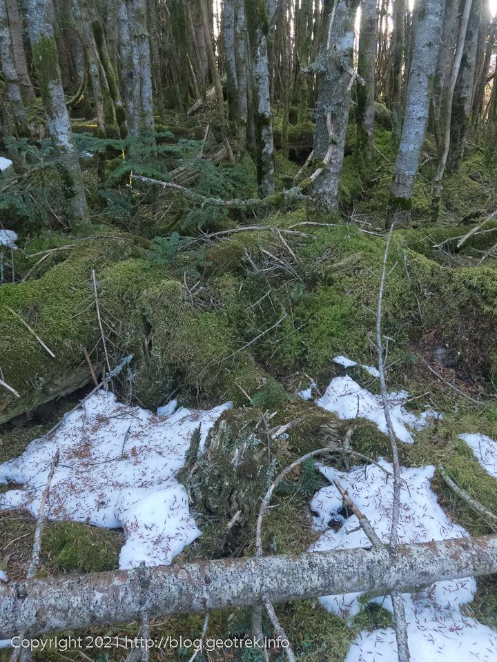 201031 縞枯山の雪