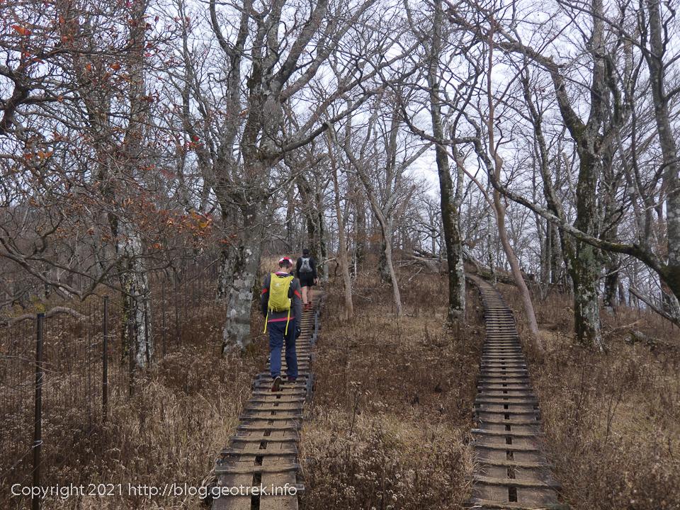 201108 檜洞丸直下のブナ林