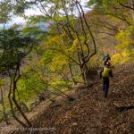 紅葉の中走り下る~同角山稜から檜洞丸(2)