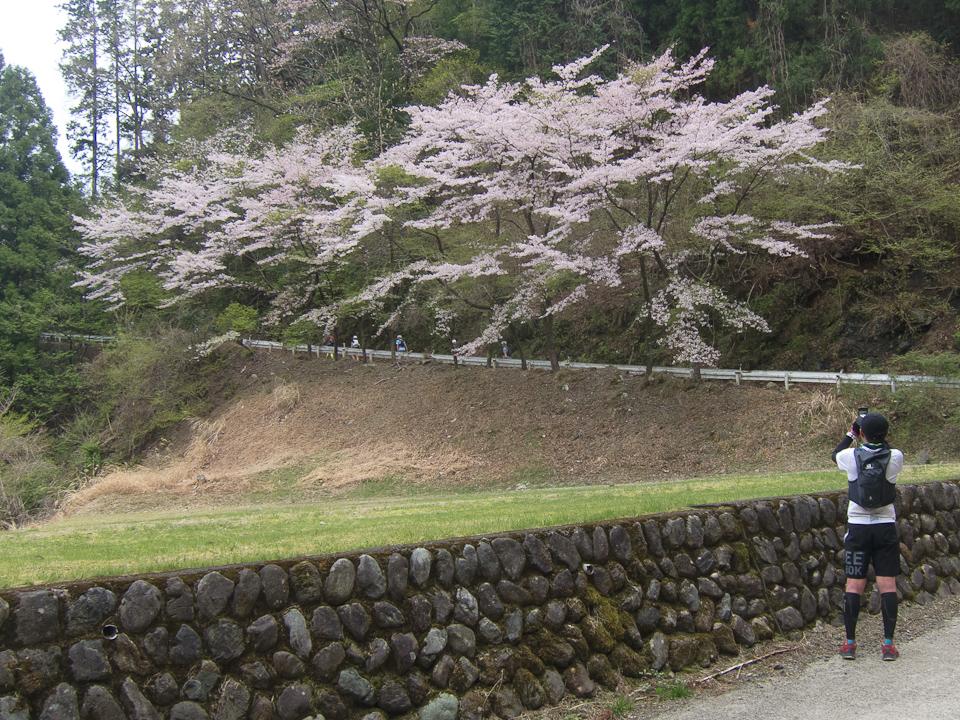 210404 高水山の桜