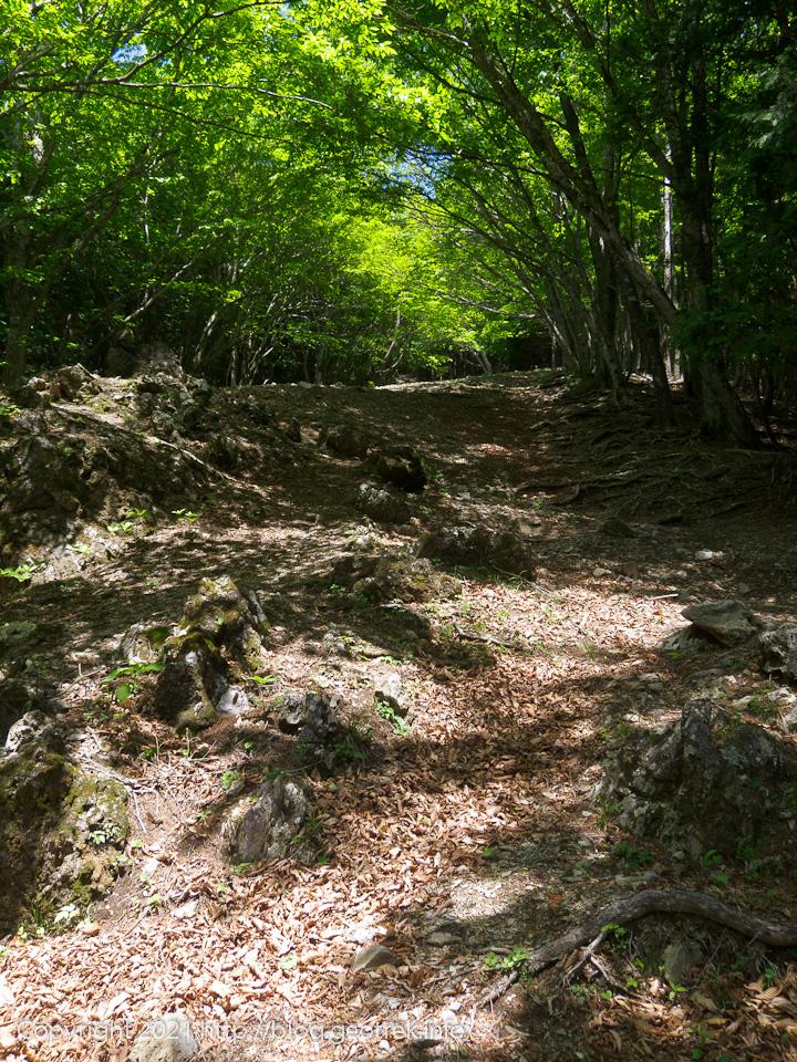 210529 木々に囲まれた六つ石山への急登