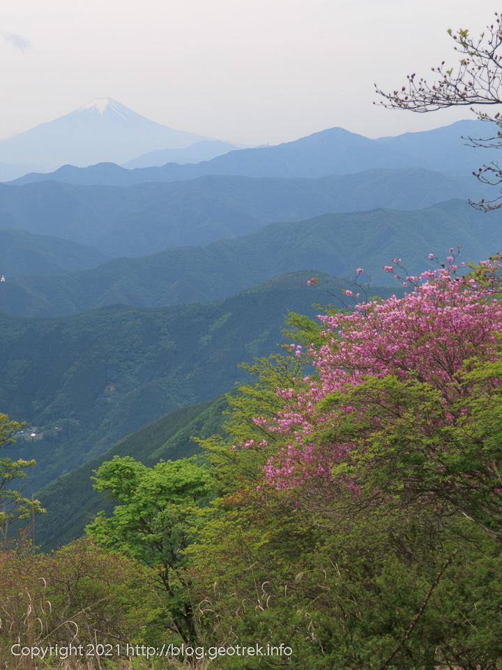 210529 鷹ノ巣山の斜面から富士山