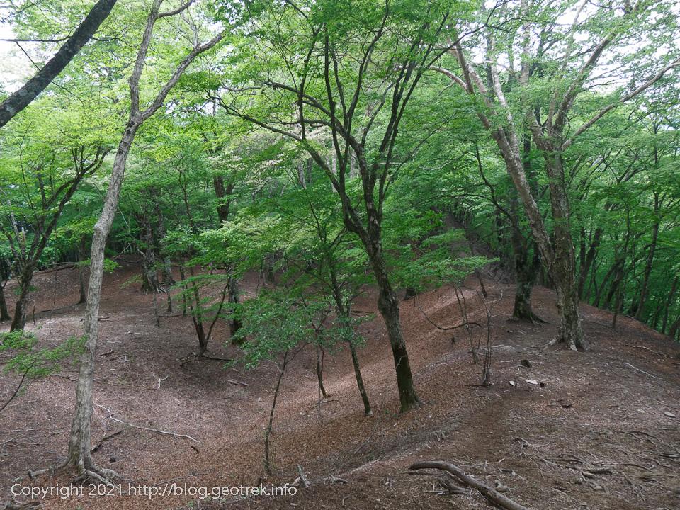 210529 榧ノ木尾根の二重稜線のブナの森