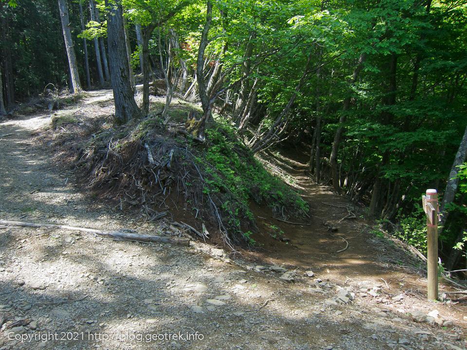 210529 新しい林道