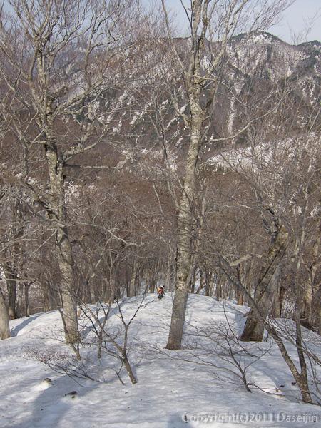 120421会津駒ヶ岳・尾根の末端が近づくと木立が濃くなる