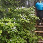 雨のまったりハイキング~棒ノ嶺