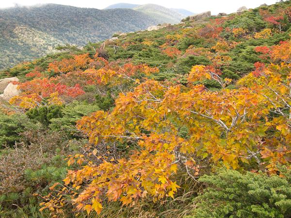 111002早池峰山・小田越の紅葉