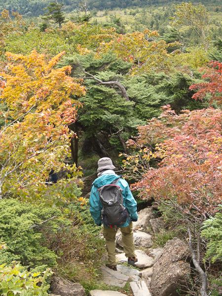 111002早池峰山・小田越の紅葉のトンネル