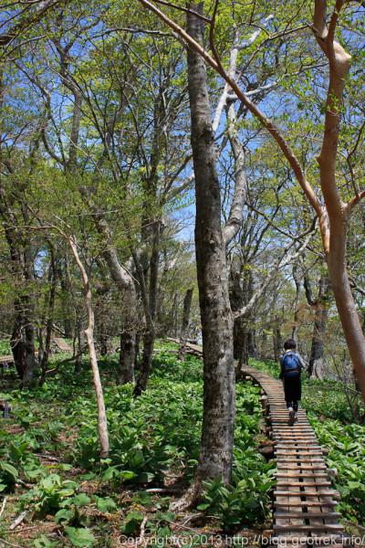 檜洞丸のブナ林