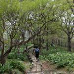 ぶなの森林浴のち温泉浴~檜洞丸、七沢温泉(2)