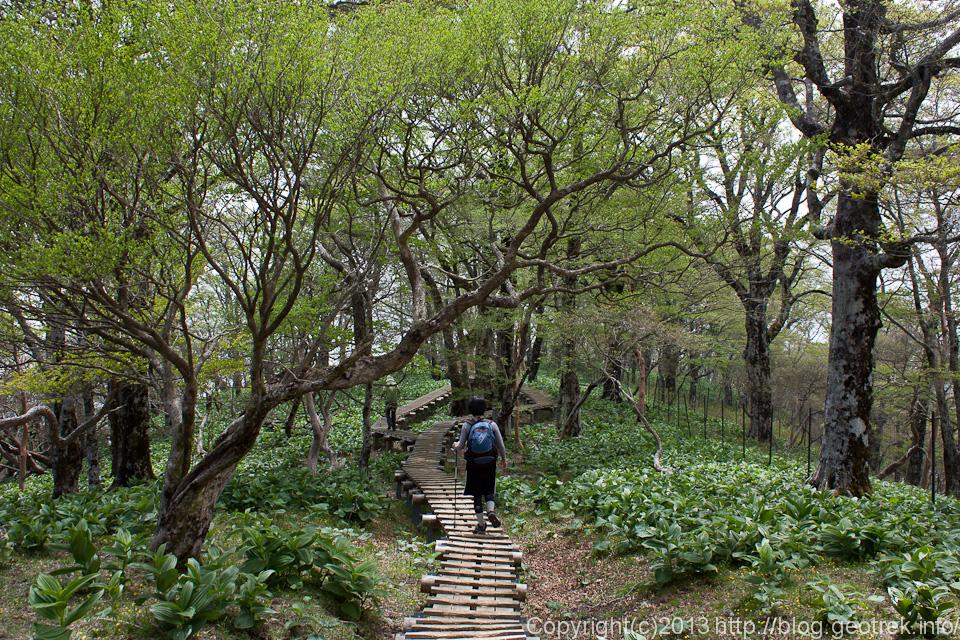 檜洞丸の森2