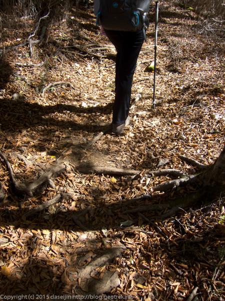 151025檜洞丸・落ち葉の道