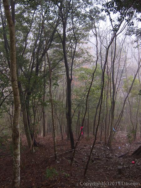 120226ヤブ沢の頭を越えると常緑樹の森