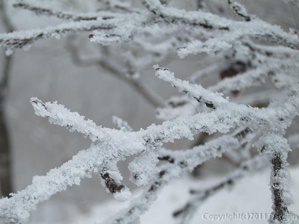 120226檜洞丸山霧氷