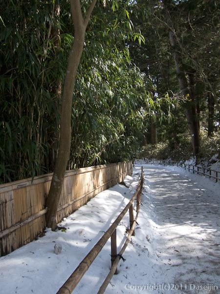 120213世界遺産平泉・中尊寺には竹林が多い