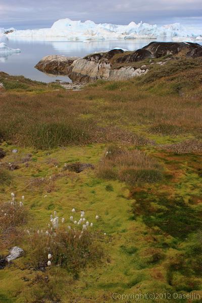 120811アイスランド、グリーンランドの旅・イルリサット、イヌイット居住地跡