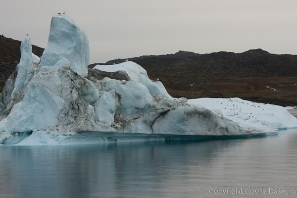 120813アイスランド、グリーンランドの旅・氷山で鳥が休む