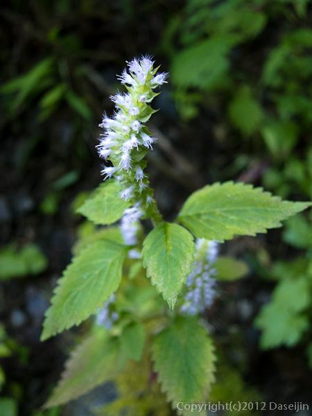 121020川苔山・秋の花