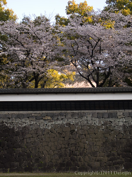 120404熊本・熊本城坪井川沿いの長塀の桜
