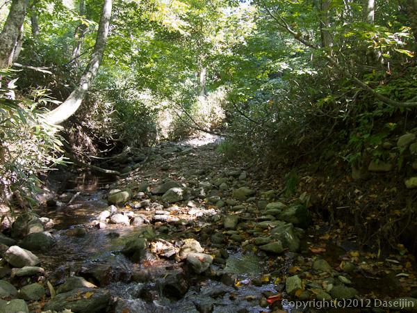 120915小赤沢・原生林の穏やかな流れ