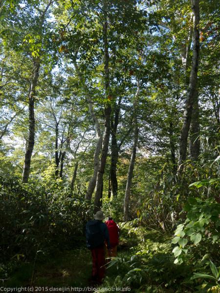 大沢森付近の原生林