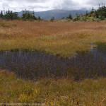 森と湿原の道~三ツ石山、乳頭山周回縦走(2)