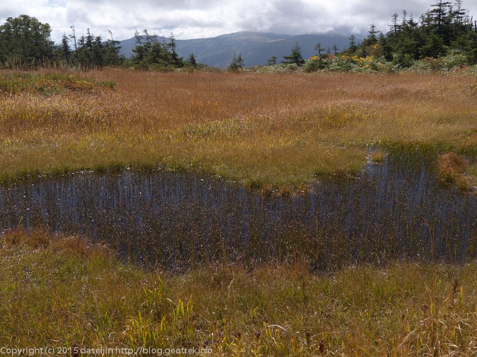 藪に囲まれた湿原