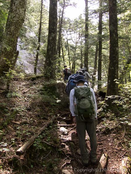 120623瑞牆山・不動沢に沿う新緑の登山道
