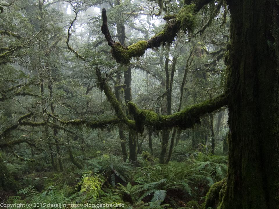 ハウデン湖へ向かう途中の樹林帯