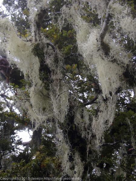 地衣類に覆われた森