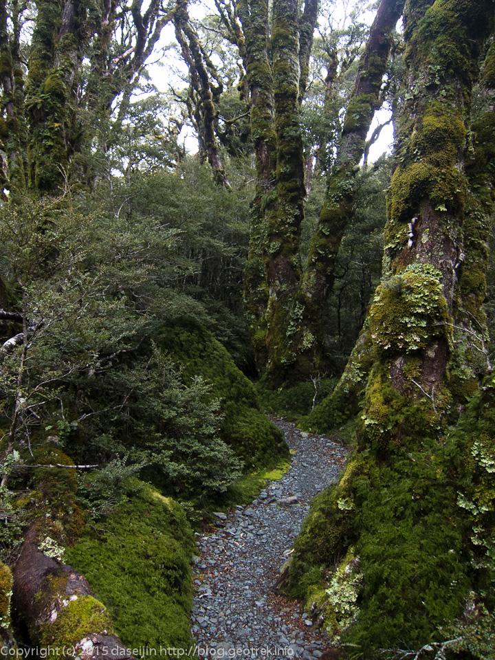 マッケンジー湖湖畔の森