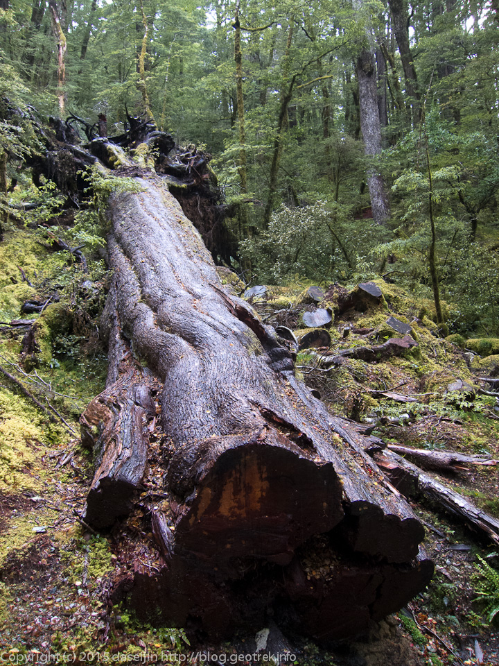ルートバーン・シェルターの手前の森