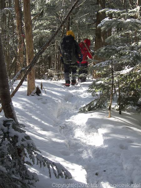 奥秩父主稜線の樹林帯