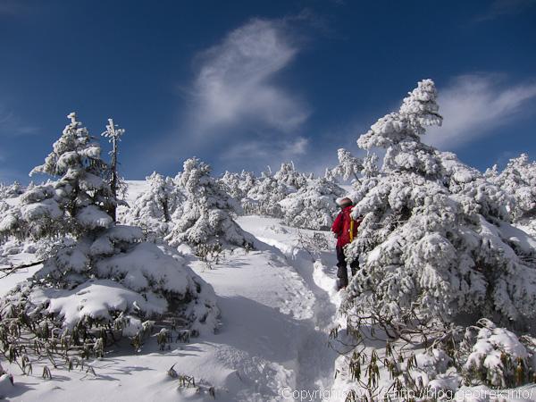 金峰山山頂直下の樹林