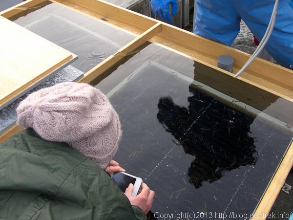 鮭の養殖場