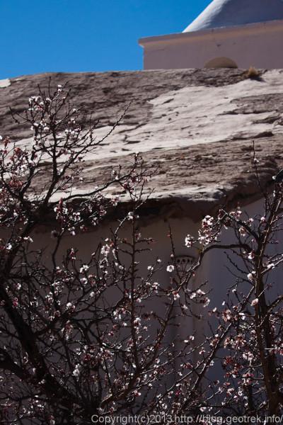 130830プルママルカ、梅の花?