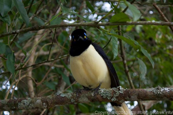 130827イグアスの滝・鳥がいっぱい