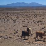 標高4000m、アンデス越え~南米4ヶ国の旅(12)