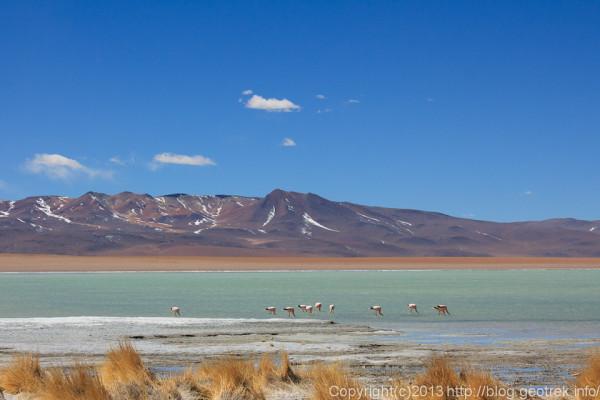130903アタカマ砂漠、温泉から見るフラミンゴ